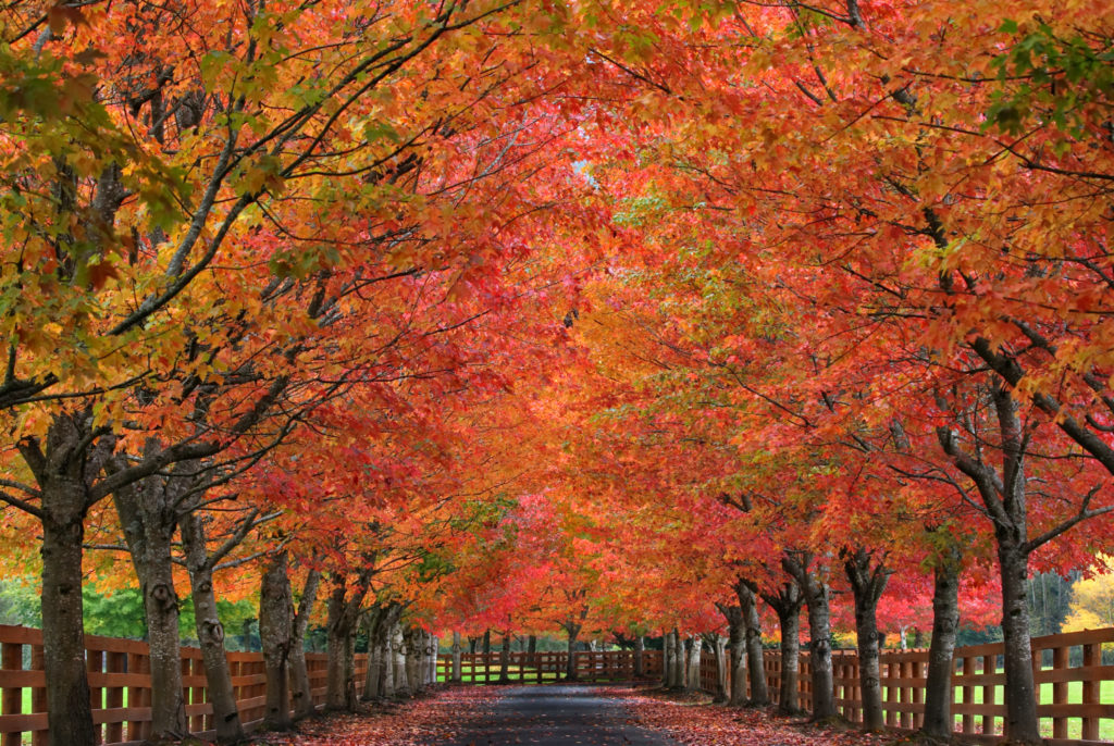 Prepare your home for fall and winter your mortgage banker for Fall home preparation